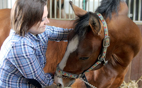 equine vet med Galbreath equine center veterinary medical center at a veterinary public health resident at ohio state's college of veterinary medicine recently returned.